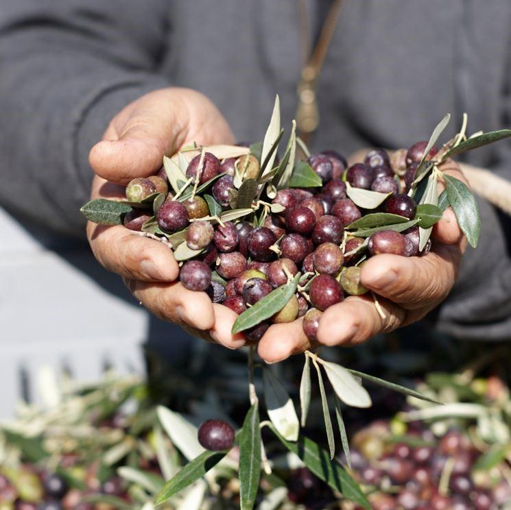 Olivolja och Vin